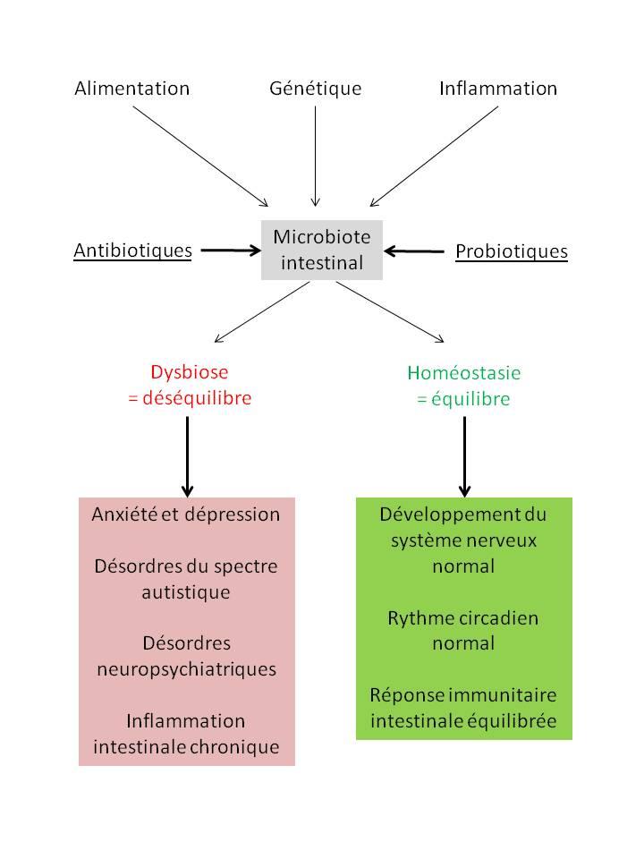 Schéma microbiote et facteurs l'affectant